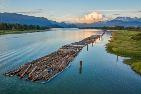 Mountain and logs floating on river Standard-Bild