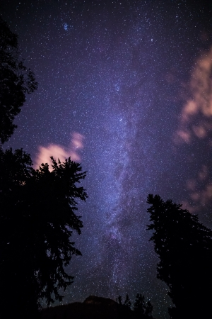 Clouds and trees with milky way stars