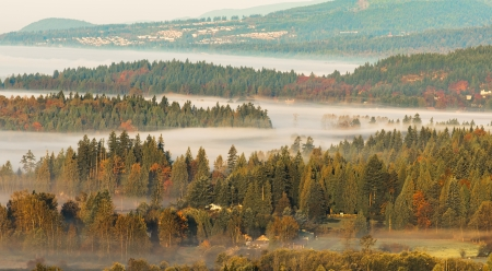 Foggy morning with layers of forest in view Stock Photo