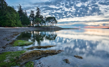 Trees reflected in coastal waters at sunrise  Stock Photo