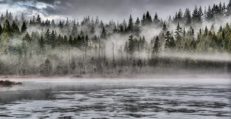 Lakeside forest with dramatic fog photo