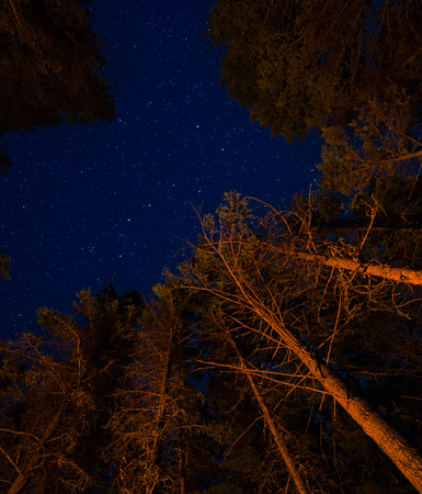 Stars and orange trees from camp fire light