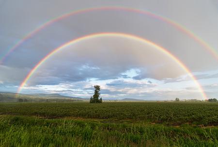 Een boom in het veld met een dubbele regenboog