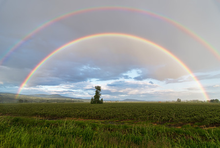 One tree in field with double rainbow