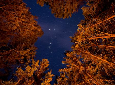 Orange lit trees with stars an big dipper