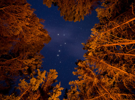 Orange lit trees with stars an big dipper