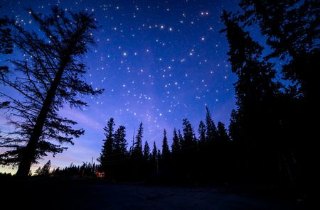 Forest Night Shot with Many twinkling stars. Stock Photo