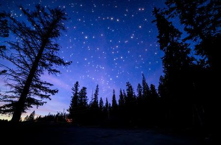 Prise de vue en Forêt Nuit avec de nombreux étoiles scintillantes. Banque d'images - 34573611