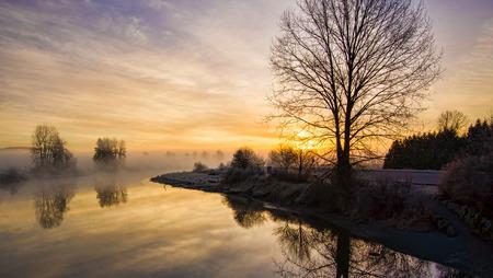 Foggy sunrise with lone leafless tree photo