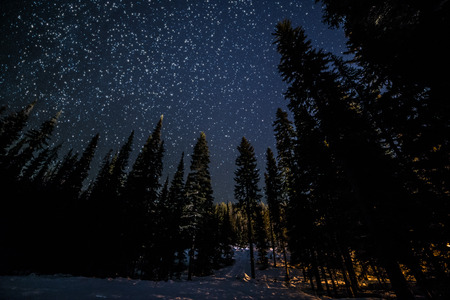 Trees in forest with many stars in winter