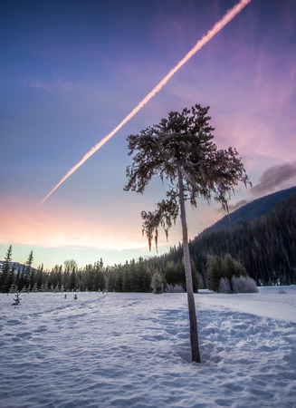 Sunrise with lone tree in winter Stock Photo