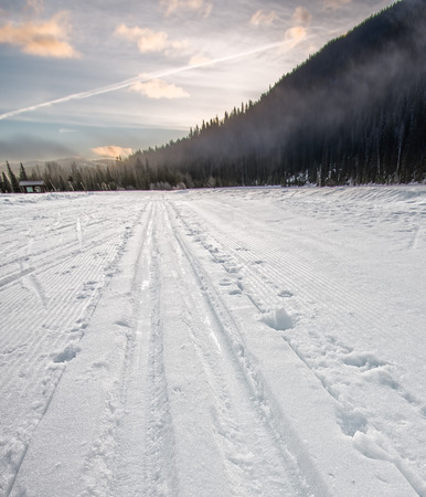 Cross Country Ski Tracks Going Into Distance Forest