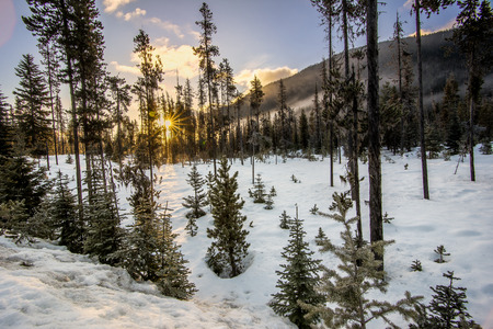 Sun star during sunrise in spare forest winter scene Stock Photo
