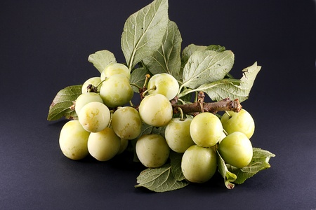 organic green plums on branch isolated on dark background Stock Photo