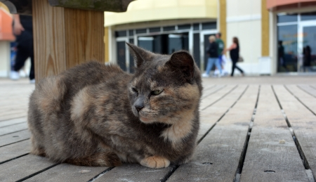 Stray cat living on the boardwalk at Atlantic City New Jersey