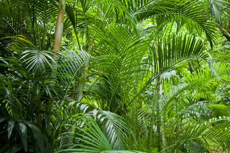 Tropical lush green palm tree jungle background