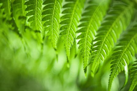 新鮮な緑のニュージーランドのシダ背景 写真素材