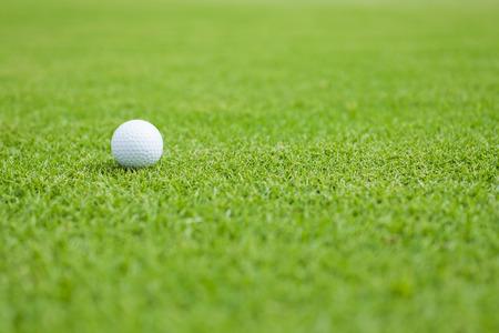 putt: Golf ball sitting on a golf course putting green