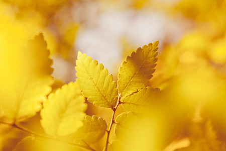 fall of the leaves: Nature background with bright autumn leaves