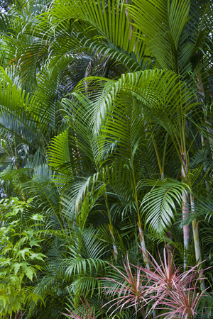 lush: Lush green tropical exotic jungle nature background