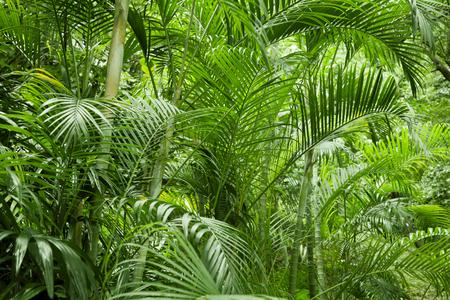 Lush green tropical jungle or garden in asia