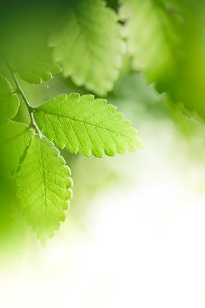 Aardachtergrond met verse groene bladeren