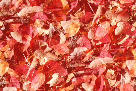 endlos: Stylised overlay design background of seamless autumn leaves that will tile endlessly
