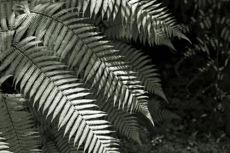 Fresh New Zealand fern backgrounds