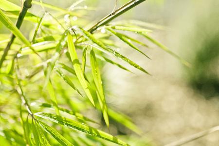 Lush, exotic green bamboo jungle nature background Reklamní fotografie