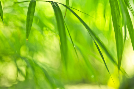 Lush, exotic green bamboo jungle nature background Stock Photo