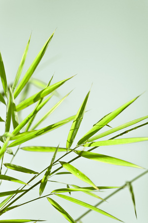 Lush, exotic green bamboo jungle nature background Reklamní fotografie