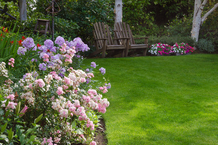 landscape: Clusters of pink and white tea roses by a lush green lawn with two rustic chairs waiting for you in the background.