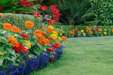Een detail, grond-level view van een mooie tuin display met een buxus haag omzoomd door kleine kleurrijke Zinnias en lobellia met rode crocosmia gedrapeerd over het. Stockfoto