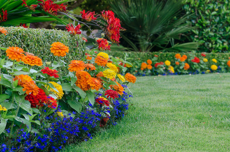 A close, ground-level view of a beautiful garden display featuring a boxwood hedge skirted by small colorful zinnias and lobellia with red crocosmia draped over it.