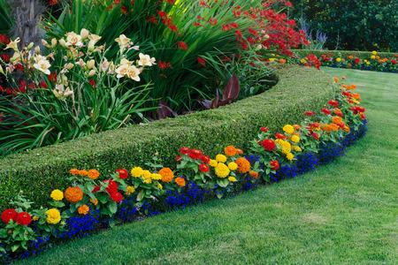옥 잠 화, crocosmia, 작은 다채로운 초속과 lobellia에 둘러싸여 곡선 회양목 헤지를 갖춘 아름다운 정원이 표시됩니다.
