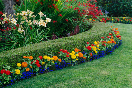 A beautiful garden display featuring a curved boxwood hedge surrounded by daylilies, crocosmia, and small colorful zinnias and lobellia.