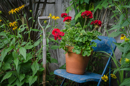 Garden still life with a weathered garden tool handle by a blue chair with a pot of bright red geraniums resting on it. A colorful piece of garden art. Standard-Bild