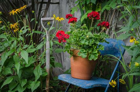 Tuin stilleven met een verweerde tuin gereedschap greep door een blauwe stoel met een pot van heldere rode geraniums rusten op het. Een kleurrijk stuk van de tuinkunst.