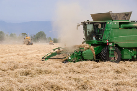 A team of combines harvest ryegrass in the Willamette Valley, Oregon. 免版税图像