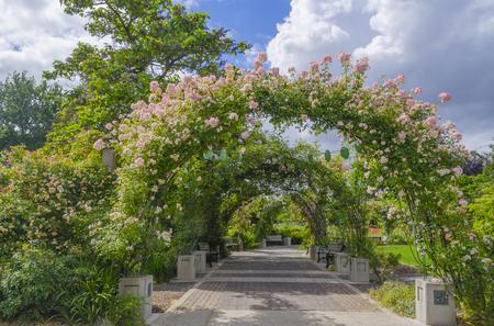 Mirando hacia abajo un camino cubierto de rosas en el Jardín de las Rosas Owens en Eugene Oregon. Foto de archivo