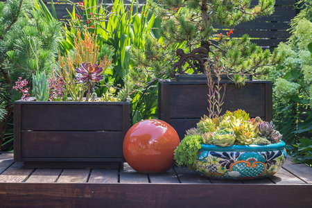 Still life on a backyard deck with succulents and a red reflection globe. 免版税图像