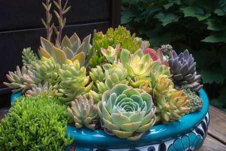 Beautiful still life of a variety of succulents in a bowl container on a wooden deck.