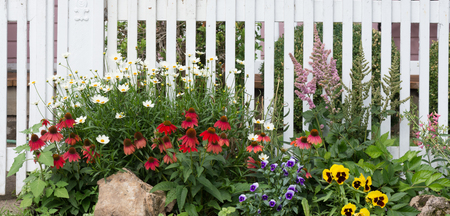 A jumble of daisies, red coneflowers, violas, astilbes, and yellow pansies in front of an old fashioned white wooden fence. 免版税图像