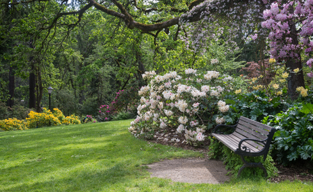 An inviting bench sits in a rhododendron park. 免版税图像