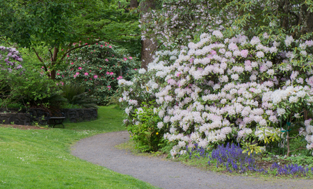 A walkway in Hendricks Rhododendron Park, Eugene Oregon
