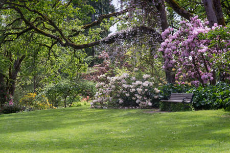 A bench sits on a shaded lawn surrounded by rhododernons in Eugene Oregon's Hendricks Park.