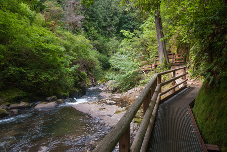A walkway along Sweet Creek in Lane County Oregon.