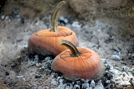 Orange pumpkin soup pots are roasting over an open bed of hot embers. This is an image depicting colonial times. Squash stew is cooking over ashes. An outdoor fire was started for this old fashioned, festive, autumn harvest meal. This is a seasonal delight. Stock Photo
