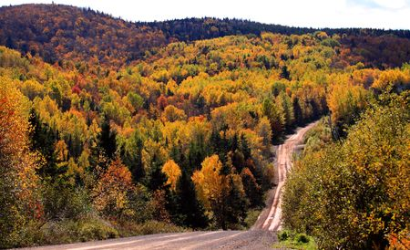 A rural dirt road in the woods during autumn in New Brunswick, Canada. 免版税图像