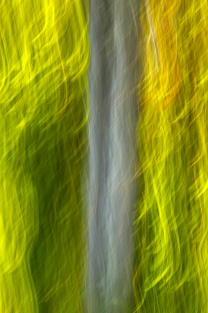 Abstract motion blur of forest producing a surreal effect